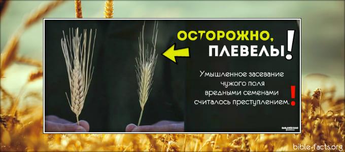 1620999742_ostorozhno-plevely